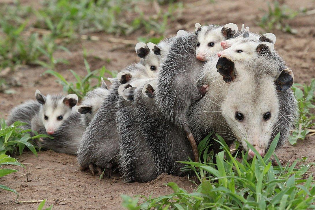 Wildlife Baby Season Is Around The Corner Eco Wildlife
